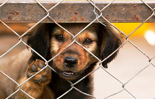 Adopt A Pet At the Yakima Humane Society